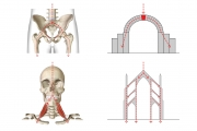 POSTURE AND THE HUMAN BUILDING