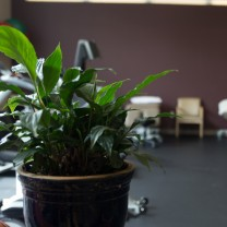 A photo of a plant in the PT360 Williston Vermont studio